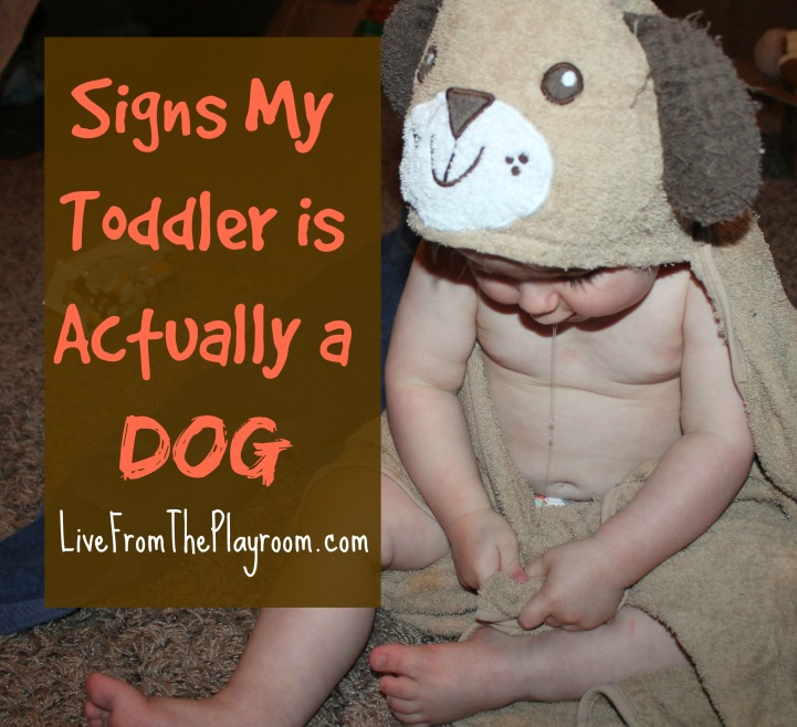signs my toddler is actually a dog